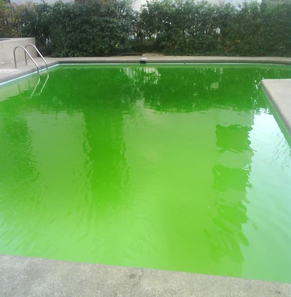 Como atacar las algas de la piscina productos limpia ya - Agua de piscina verde ...